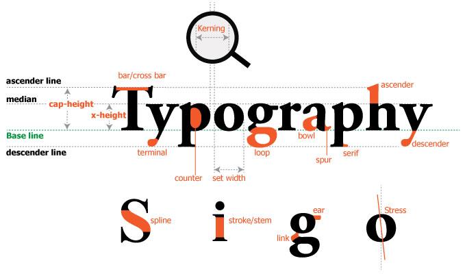 typo anatony - typography cơ bản
